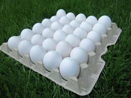 Das Ei - einmalig