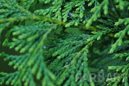 09 - grün, brauntöne