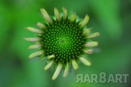 31 - grün, brauntöne