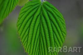 41 - grün, brauntöne
