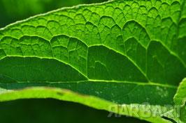 26 - grün, brauntöne