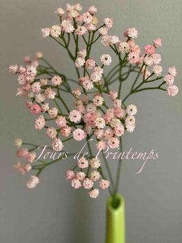 Gypsophille rose pâle