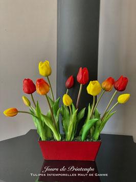 Barquette de Tulipes GM Picasso
