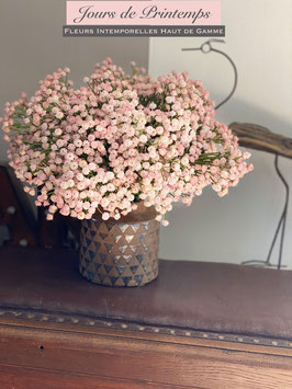 Gypsophille rose pâle