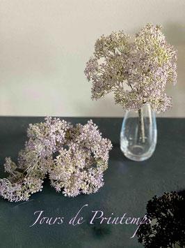 Botte de 5 branches de fleurettes mauves