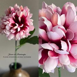 Tige de Chrysanthème rosé