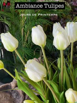 Offre spéciale 3 bottes de tulipes