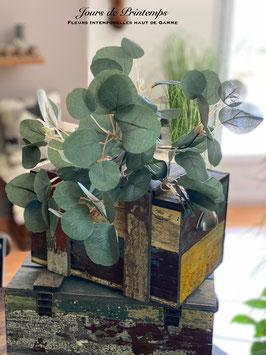 Botte de 7 branches d'Eucalyptus