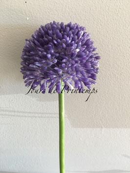 Allium mauve Tige de 44cm