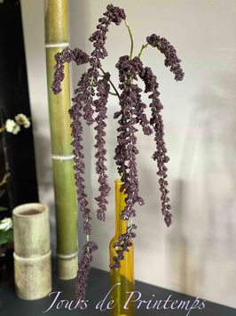 Amaranthe violette