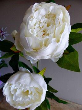 Pivoine blanche , la tige de 2 fleurs et un bouton