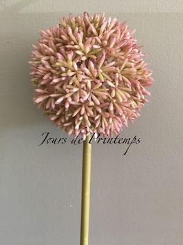 Allium rose pâle Tige de 66 cm