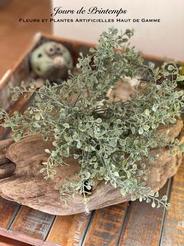 Botte de petites feuilles veloutées