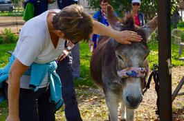 Séance de Médiation animale - Vivez la doudouthérapie !