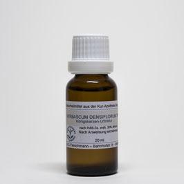 Verbascum densiflorum TM – Königskerzen-Urtinktur