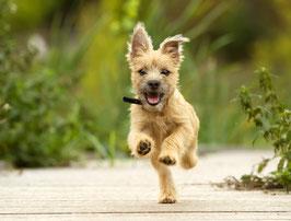 Sicherer Rückruf - Schritt für Schritt (auch mit Hundepfeife) Premiumpaket