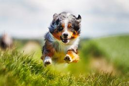 Sicherer Rückruf - Schritt für Schritt (auch mit Hundepfeife) Basispaket