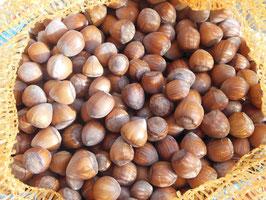 Rieser Haselnüsse aus Kroatien, Ernte 2020, Sortierung >20 mm