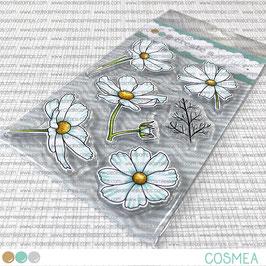 Clear A6 Cosmea