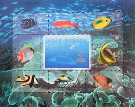 海底世界 珊瑚礁鑑賞魚