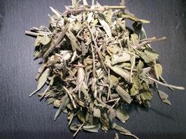 Griechischer Salbei ( Salvia officinalis)