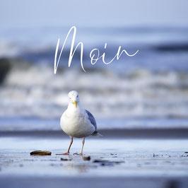 """Moin"" Möve"