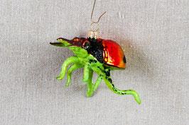 Käfer mit grünen Beinchen
