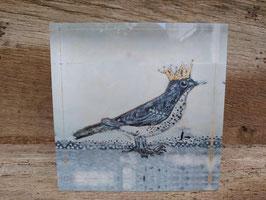 königliche Singdrossel
