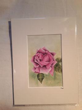 Buntstiftzeichnung Rose / Unikat