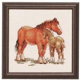Borduurpakket van een paard met een veulen.