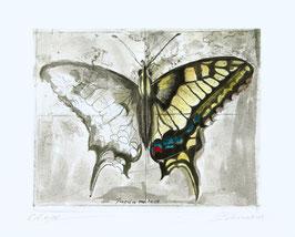 Radierung - Schmetterling 1615
