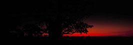 Burning Baobab