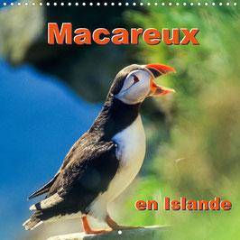 Macareux en Islande (2022)