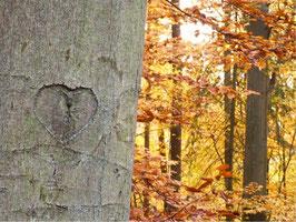 Baumherz im Herbst, Briefkarte