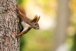 Ein Eichhörnchen sagt Hallo, Briefkarte