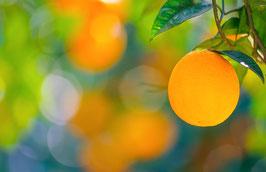 Orange am Baum, Briefkarte
