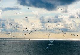 Basstölpel über der Nordsee, Briefkarte
