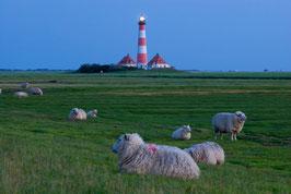 Leuchtturm Westerhever und Schafe, Briefkarte