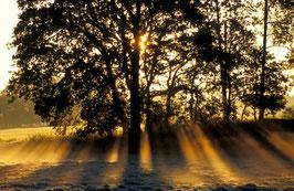 Sechs Sonnen, Briefkarte