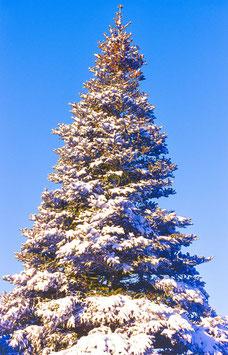 Weihnachtsbaum, Briefkarte