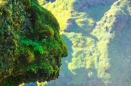 Naturgeist, Briefkarte