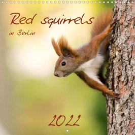 Red squirrels in Berlin (2022)