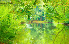 Waldfluss im Sommer, Briefkarte