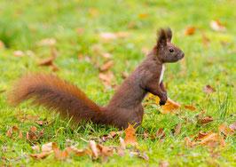 Eichhörnchen macht Männchen, Briefkarte