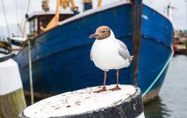 Hafen an der Nordsee, Briefkarte