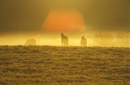 Pferde im Nebel, Briefkarte