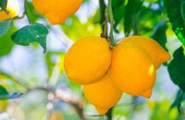 Zitronen am Baum auf Mallorca, Briefkarte