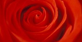 Rote Rose (B-Ware)