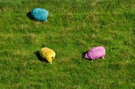 Bunte Schafe, Briefkarte