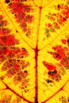 Herbstblatt, Briefkarte